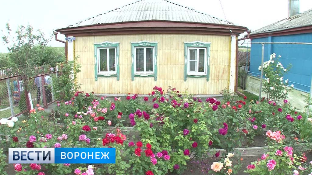 Воронежцы не спешат проводить межевание дачных участков