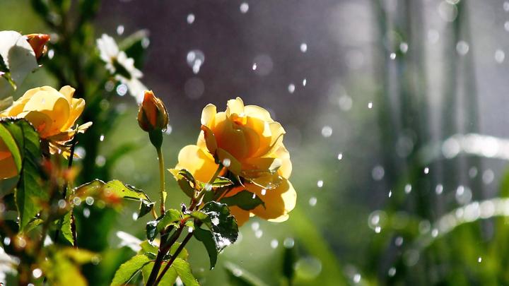 Жителей Воронежской области на этой неделе ждёт очень тёплая погода, но возможны дожди