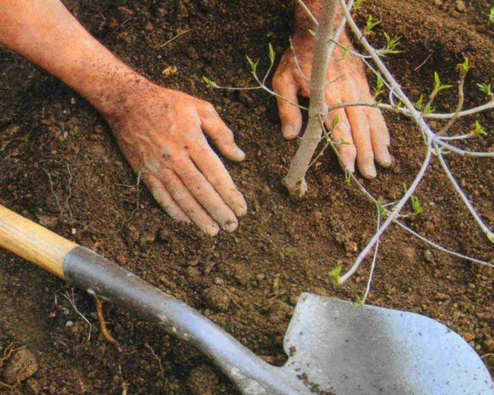 Власти помогут воронежцам выполнить третий пункт из фразы про «сына, дом и дерево»