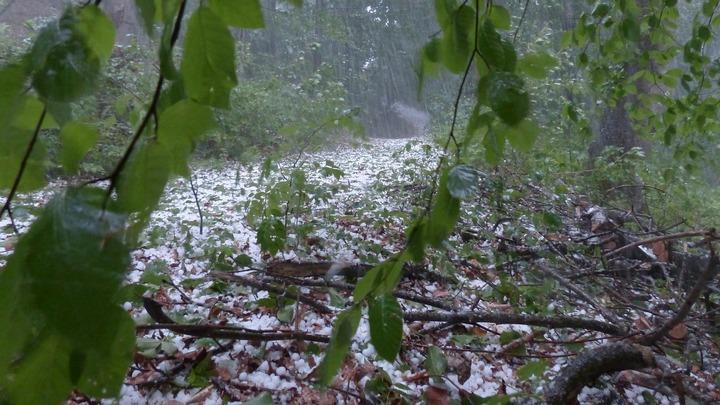 Спасатели предупредили о грозах и граде в Воронежской области