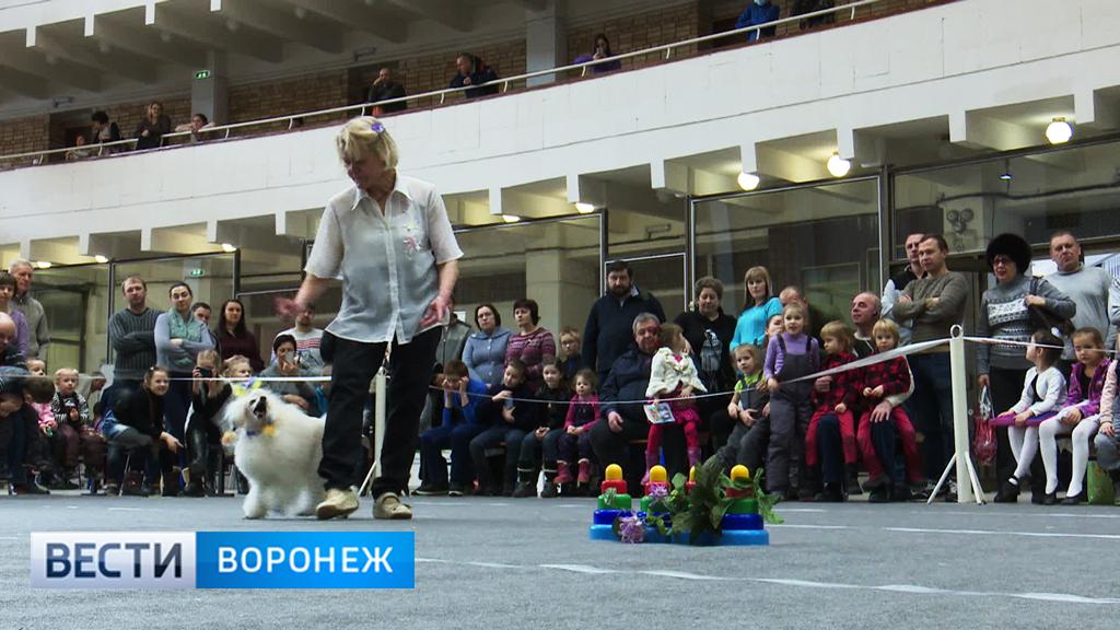 В Воронеже прошёл необычный танцевальный конкурс для собак