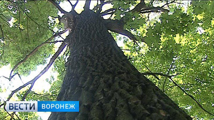 Воронежские власти вернулись к планам строительства дороги через Нагорную дубраву