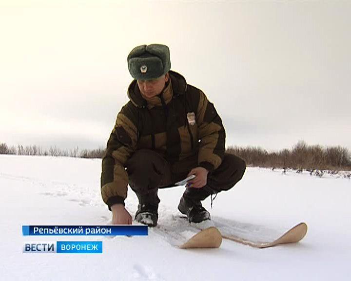 Охотоведы Воронежской области проводят перепись диких животных