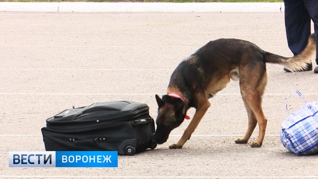 В Воронеже на соревнованиях кинологов служебные собаки искали взрывчатку