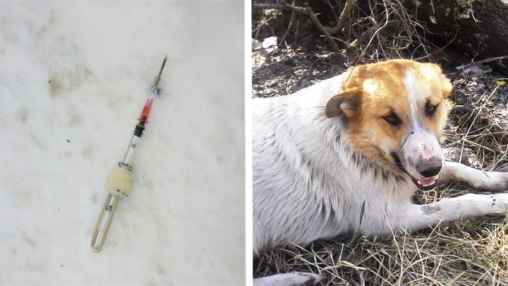 ВВоронеже из-за жалоб городских жителей вновь отлавливают бездомных собак