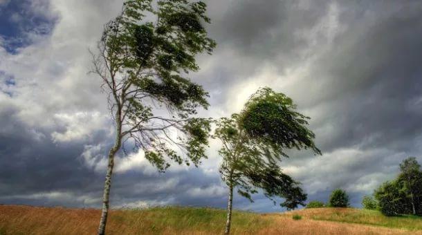 Спасатели предупредили о сильном ветре в Воронежской области