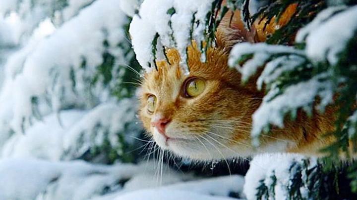 В Воронежской области на выходных столбик термометра поднимется до +2 градусов