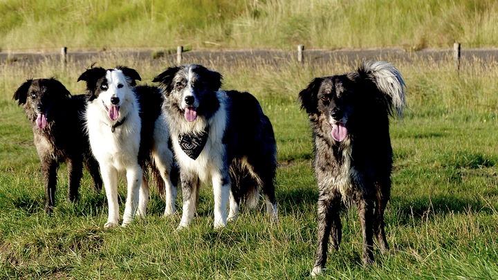 Воронежец предупредил о нападающей на людей стае бродячих собак
