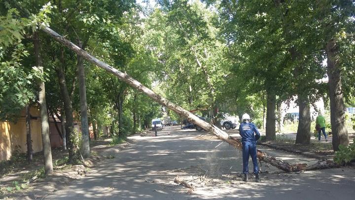 Повреждённые автомобили и электропровода. В Воронеже порывистый ветер повалил 10 деревьев