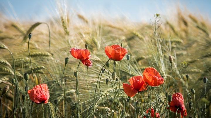 В Воронежской области появится новый природный заказник «Яр Рассыпной»
