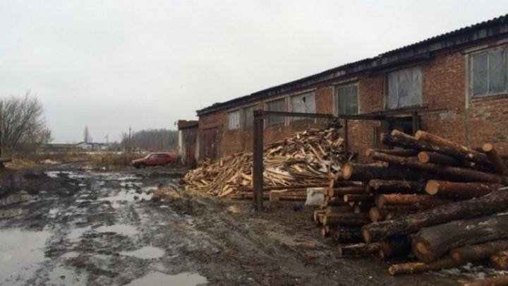 Жители Воронежской области получили реальные сроки за вырубку дубов на 38 млн рублей