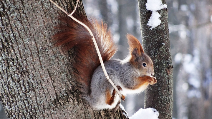 Воронежцы выразили в фотографиях, как скучали по снегу и настоящей зиме