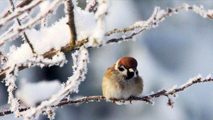 В Воронежской области к концу недели вновь потеплеет