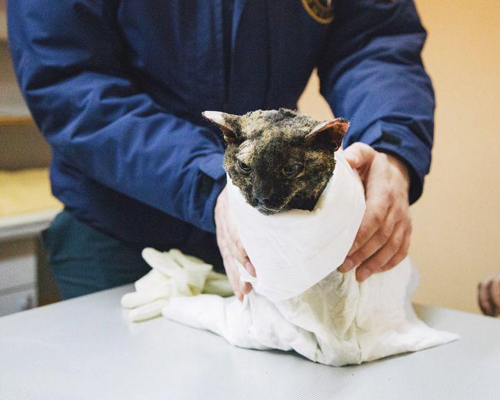 Кошка, найденная на руинах взорвавшейся сауны, всё-таки не выжила