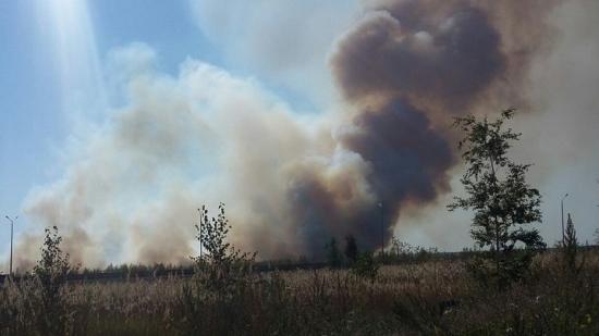 Спасатели потушили пожар площадью 2 га в Железнодорожном районе Воронежа