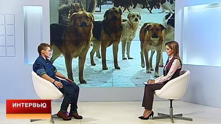 Специалист по отлову собак: воронежцы сами обращаются к догхантерам