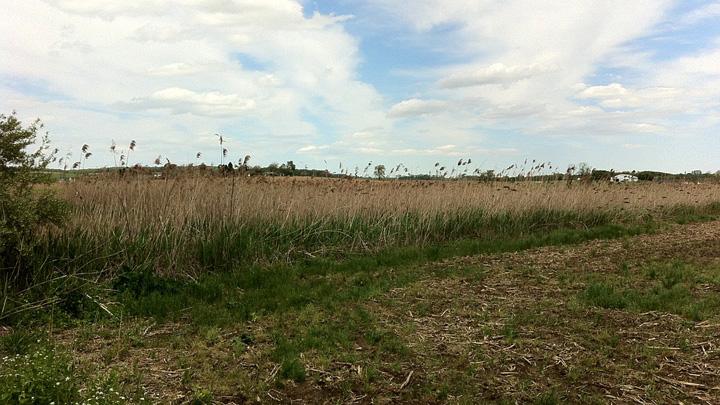 В собственность Воронежской области оформили 120 тыс. га невостребованных земель