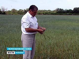 Аграрии области боятся повторения засухи лета 2010 года