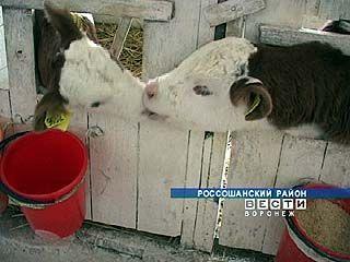 Аграрии Воронежской области подсчитывают убытки