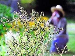 Аллергики области не смогут вздохнуть свободно до октября