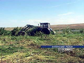Аннинские наркополицейские уничтожили тайное поле конопли