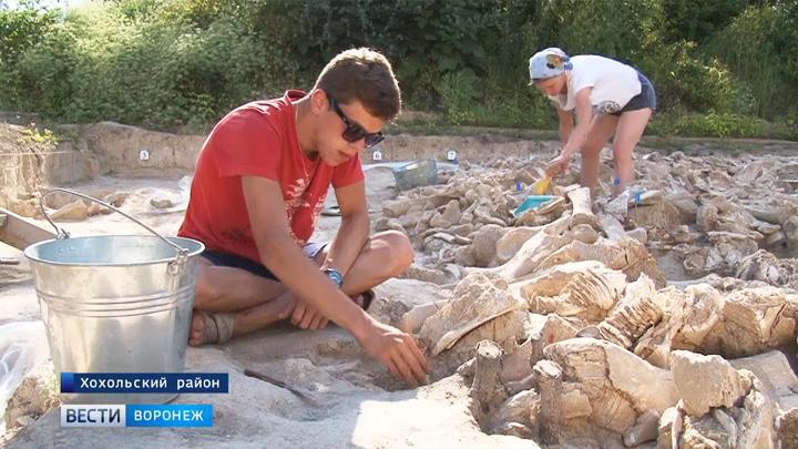 64 мамонта, пантеры и лошади: Каким находками открыли сезон археологи в «Костёнках»