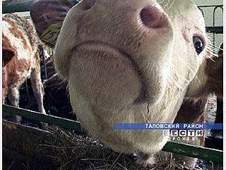 Австрийские коровы приносят прибыль отечественному производителю