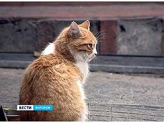 Бешеных животных в Воронежской области становится больше
