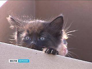 Бездомным кошкам и собакам искали хозяина у Никитинской библиотеки