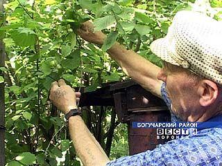 Богучарский пенсионер озеленил центр города