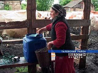 Большая аварская семья из Таловского района легко справляется со стадом в 40 коров