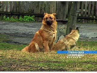 Бродячие и домашние животные стали чаще нападать на жителей Верхнемамонского района