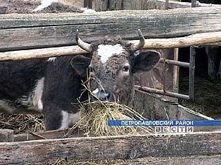 """""""Бычок"""" остался без бычков"""