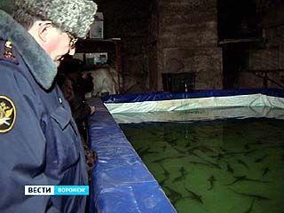 """Бывшие заключенные выращивают Осетров и белуг в центре реабилитации """"Назарей"""""""