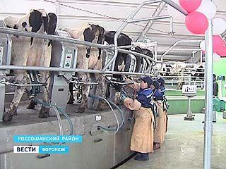 Cамый крупный в области молочный комплекс построен с нуля всего за год