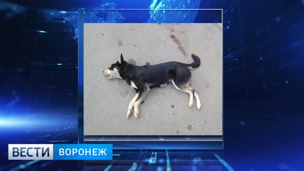 В Боровом за две недели неизвестные расстреляли около 10 собак