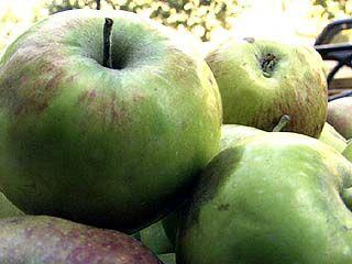 Черноземье останется без фруктов