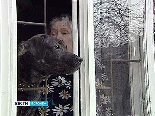 Чиновники увеличили штрафы для безответственных собачников почти в 5 раз