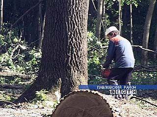 Чиновников Управления лесного хозяйства области призвали к ответу