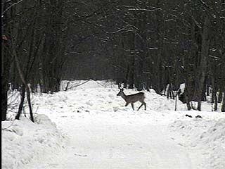 Число нарушений в Воронежском заповеднике значительно сократилось