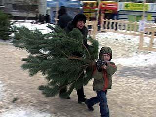 Чтобы законно торговать ёлками в Воронеже, нужна целая кипа документов