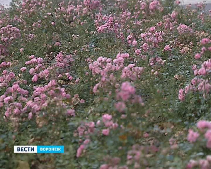 """Деньги на реконструкцию парка """"Динамо"""" найдут, обустройство будет закончено полностью"""