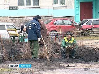 Депутаты гордумы запретили воронежцам сажать деревья