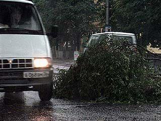 Дерево упало на маршрутное такси