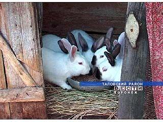 Диетическое мясо кролика продать, кроме как на рынке, негде