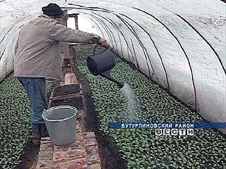 Для воронежских овощеводов-любителей сезон только начинается