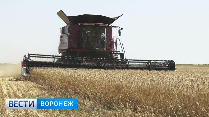 Воронежские аграрии отметили День работника сельского хозяйства