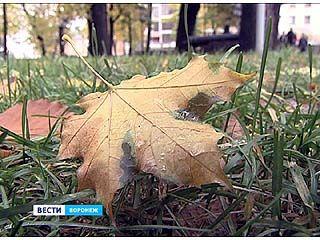 До середины ноября воронежские синоптики обещают тепло