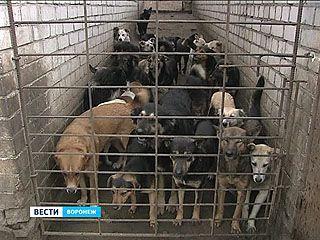 Догхантеры обещали массовую травлю собак, зоозащитники вышли на дежурства