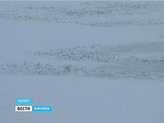 Долгожданный снег выпал на юге Воронежской области - поля теперь морозоустойчивы